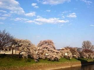 20140413逢瀬川(その25)