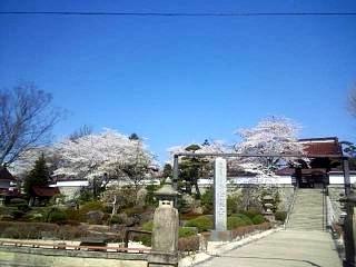 20140414郡山の桜(その4)
