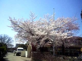 20140414郡山の桜(その6)