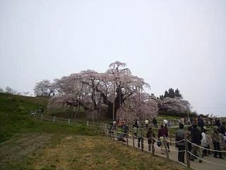 20140418三春の滝桜(その1)