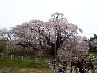20140418三春の滝桜(その2)