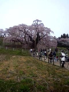 20140418三春の滝桜(その3)