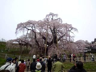 20140418三春の滝桜(その4)