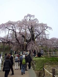 20140418三春の滝桜(その5)