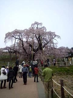 20140418三春の滝桜(その6)