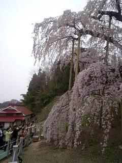 20140418三春の滝桜(その9)