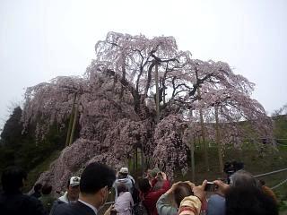 20140418三春の滝桜(その10)