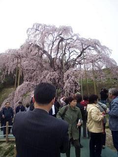 20140418三春の滝桜(その11)