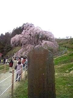 20140418三春の滝桜(その13)