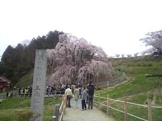20140418三春の滝桜(その15)