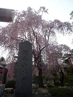 20140420開成山大神宮桜(その5)