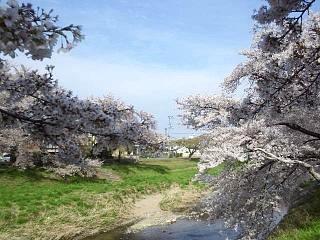 20140420逢瀬川(その3)