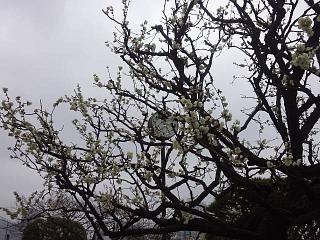 20140301芝浦散歩(その3)