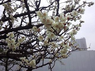 20140301芝浦散歩(その4)