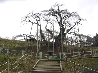 20140404滝桜