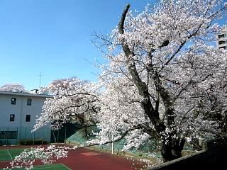 20140413逢瀬川(その26)