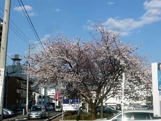 20140413逢瀬川(その27)