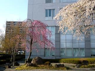20140413逢瀬川(その29)