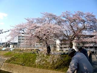 20140413逢瀬川(その33)