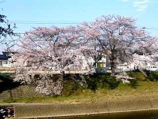20140413逢瀬川(その37)