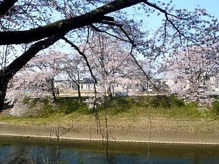20140413逢瀬川(その38)