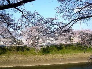 20140413逢瀬川(その39)