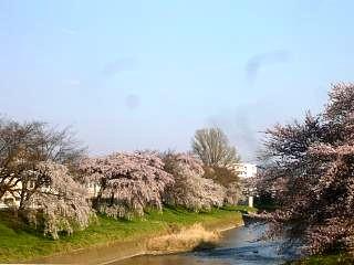 20140413逢瀬川(その41)