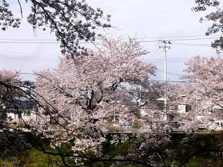 20140420逢瀬川(その14)