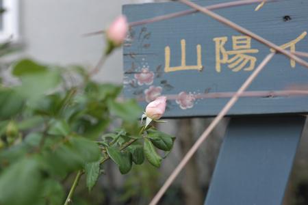 rose20141011-9.jpg