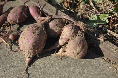 sweetpotato20141015-5.jpg