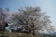 戸隠蕎麦2014春17
