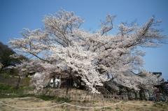 戸隠蕎麦2014春18