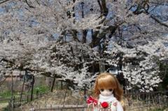戸隠蕎麦2014春29
