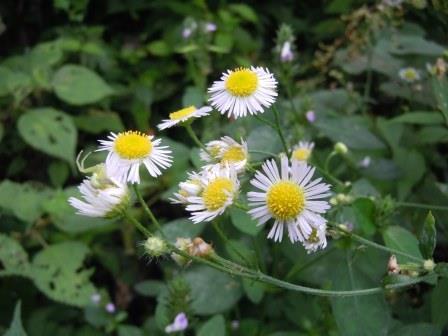 庭の小花3(2013-09-21)