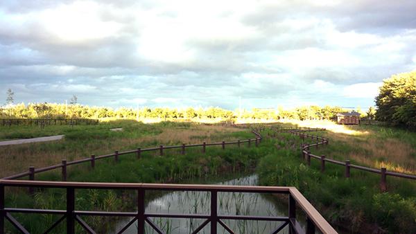 湿地みたいなあ