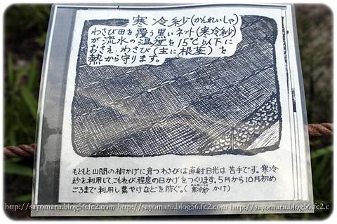 sayomaru10-976.jpg