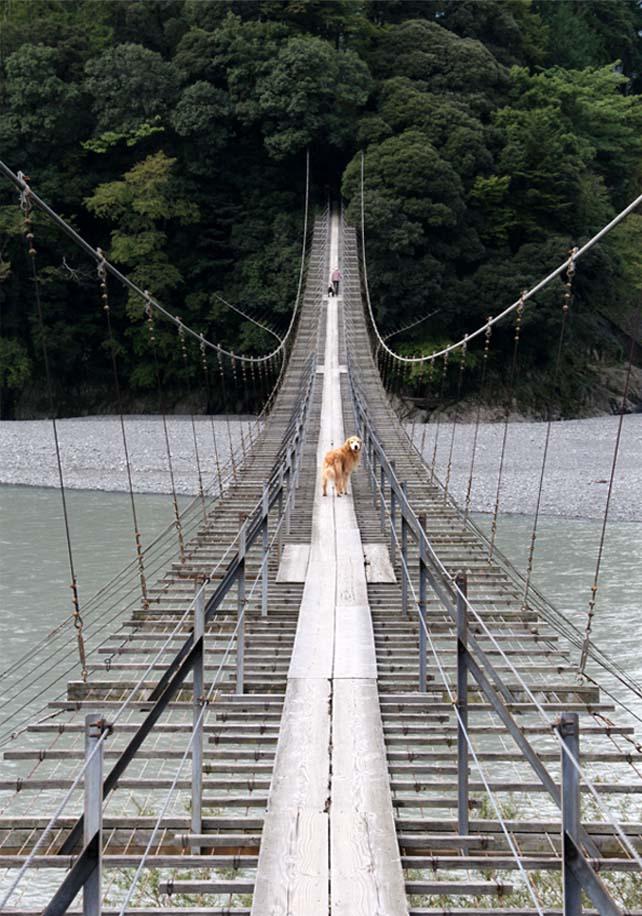 吊り橋ツアー(1)