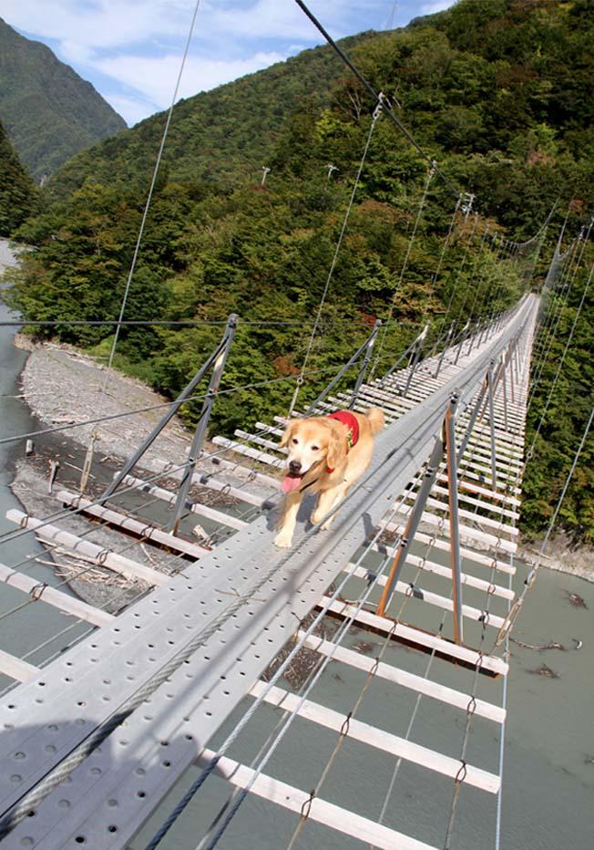 吊り橋ツアー(2)