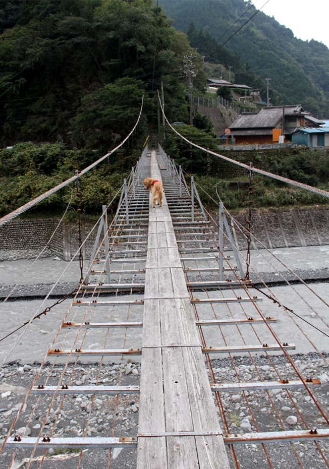 吊り橋ツアー(4)
