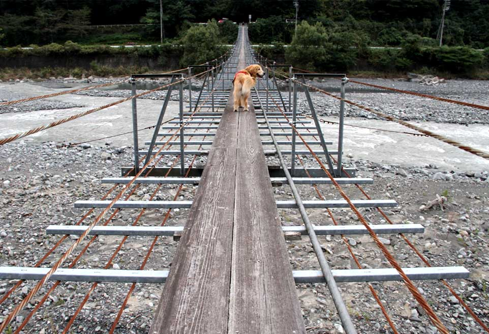 吊り橋ツアー(5)