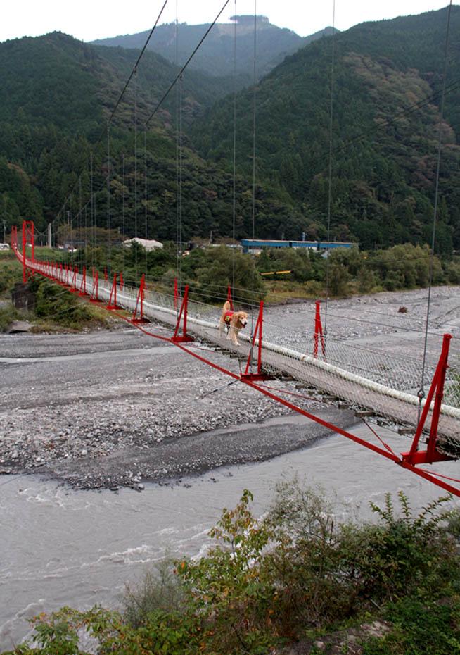 吊り橋ツアー(6)