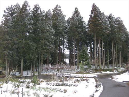 関ケ原合戦 薩摩池 小関 無名兵士の墓