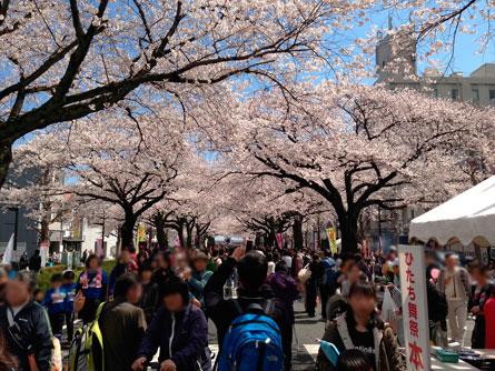 桜並木_140407