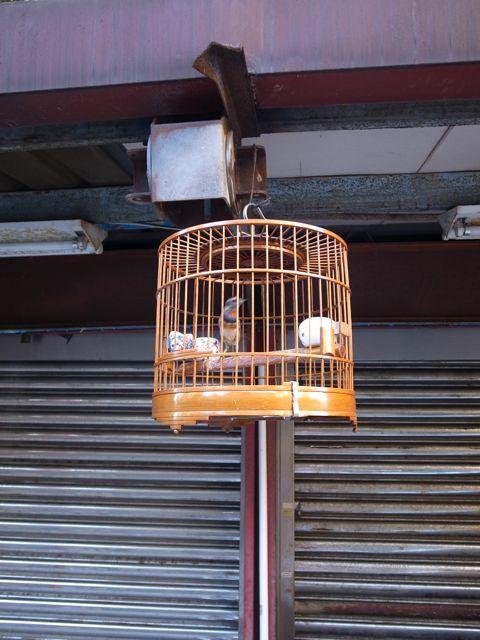 台北 鳥かご