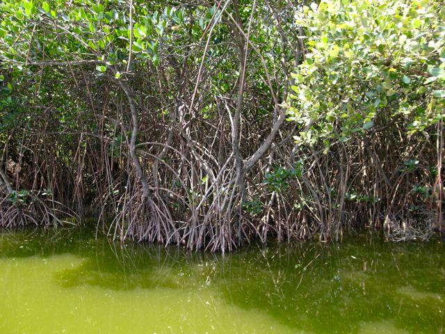 四草湿地 9