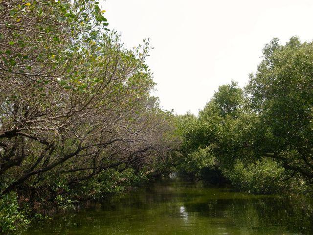 四草湿地 11