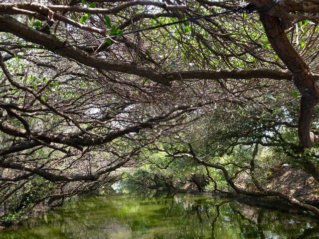 四草湿地 12