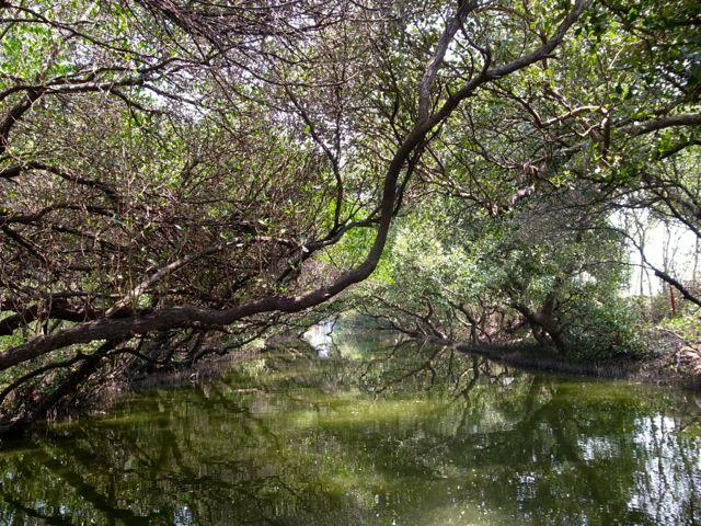 四草湿地 13