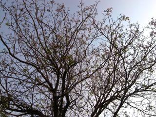 台南の花 1