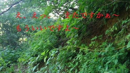 GEDC0519_R.jpg